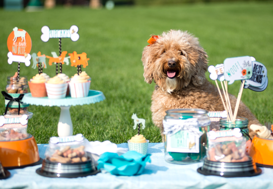 Puppy-Party-Ideas7